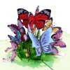 Butterflies Pop Up Card
